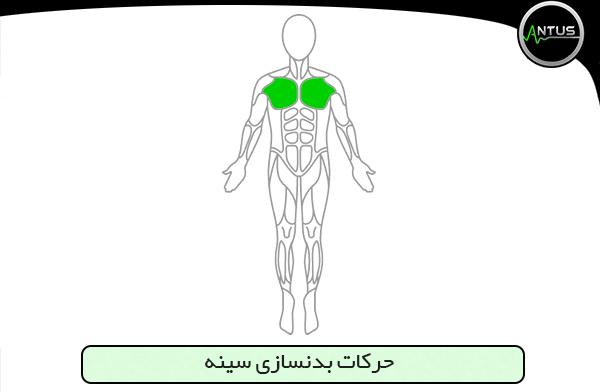 حرکات سینه بدنسازی