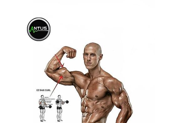 تقویت عضله جلو بازو