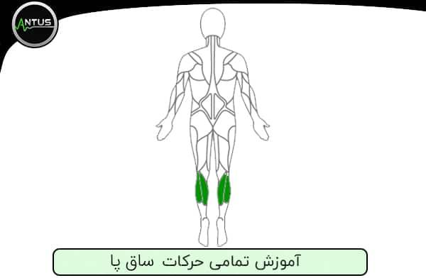 حرکات بدنسازی ساق پا