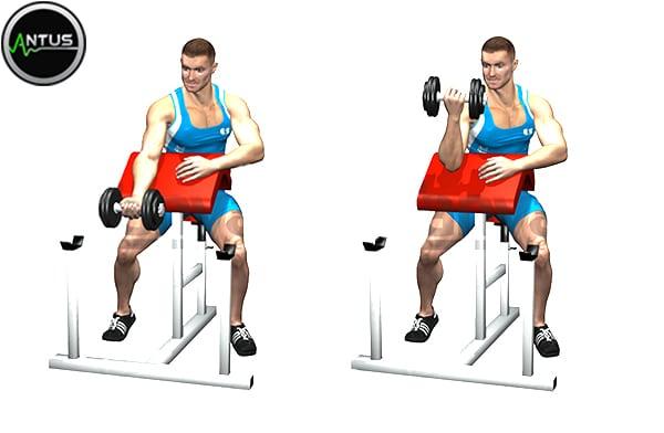 آموزش حرکت جلو بازو دمبل لاری تک دست