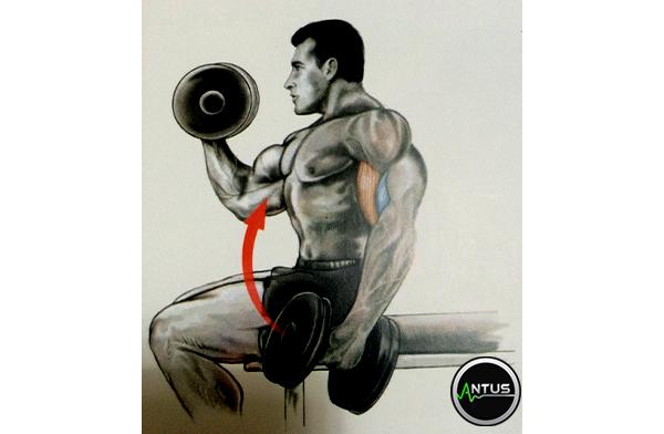 تمرین جلو بازو دمبل چکشی