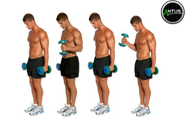 آموزش حرکت جلو بازو دمبل چکشی