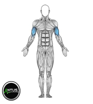 تقویت عضلات جلو بازو